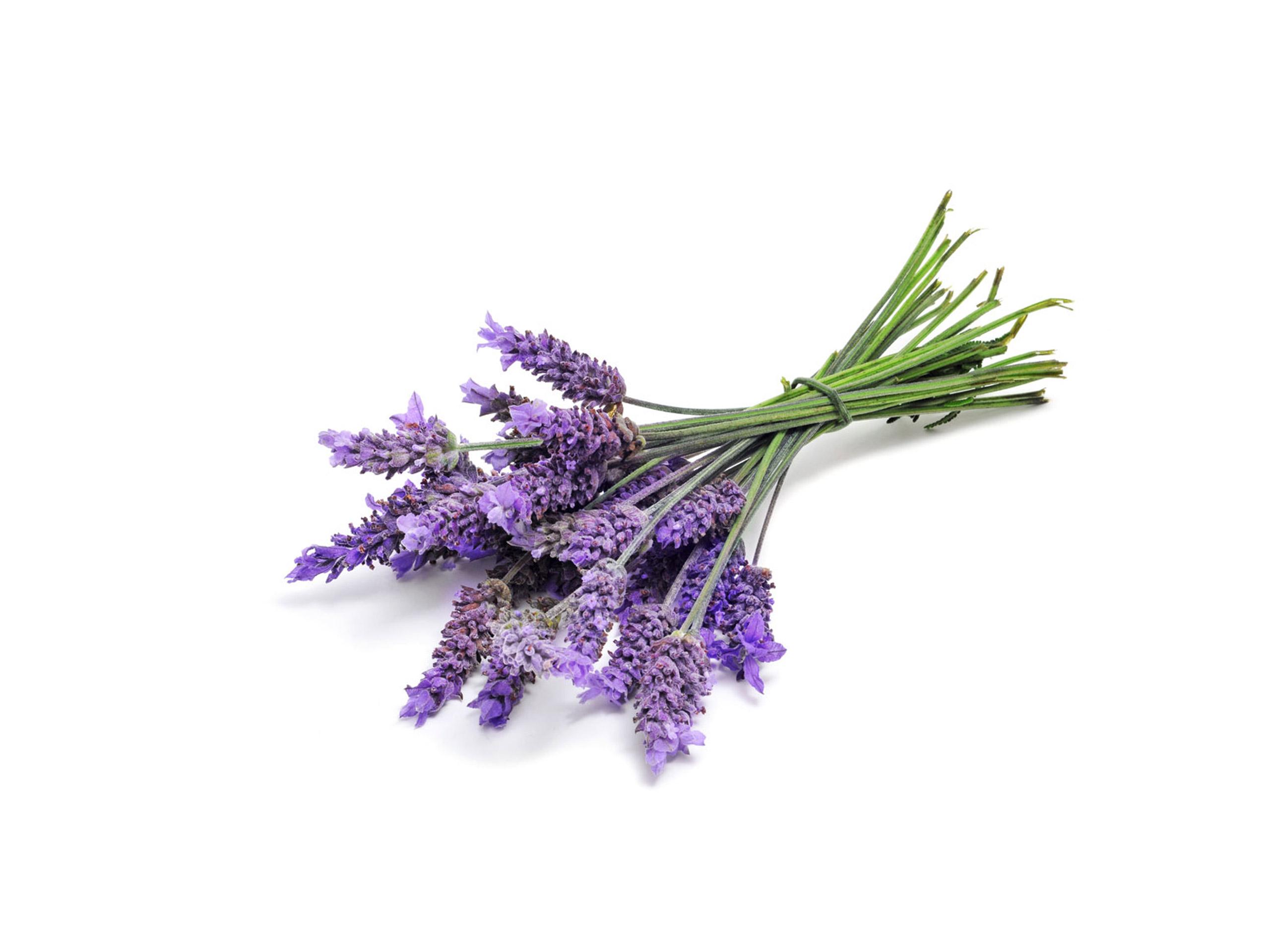 Lavendel Touch®