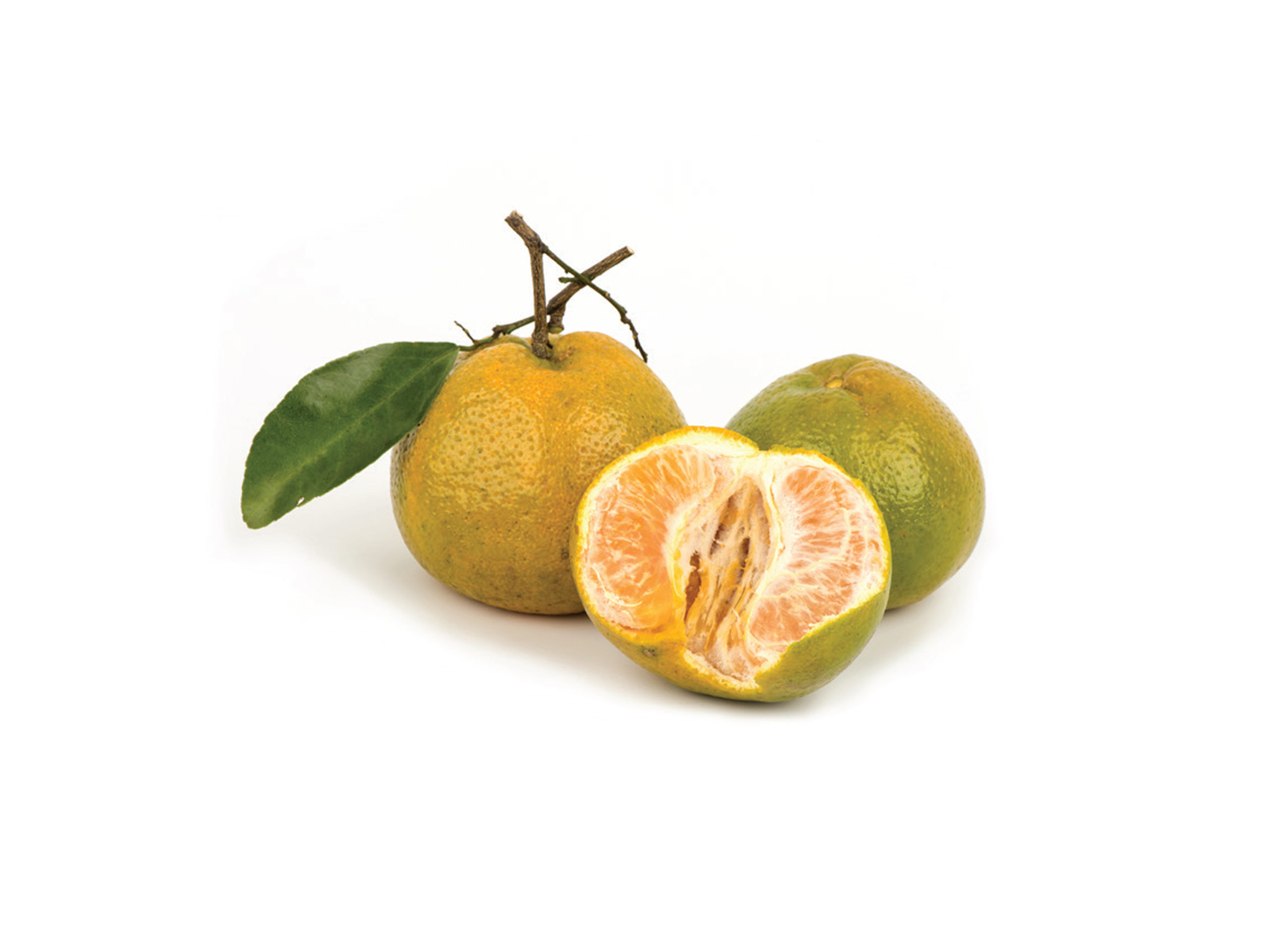 Grüne Mandarine